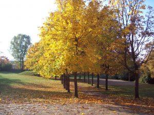 Außengelände in leuchtenden Herbstfarben