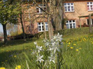 Blühende Wiese im Frühling an der Jugendherbere Malchow