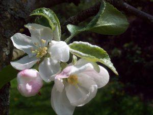 Frühling in Malchow